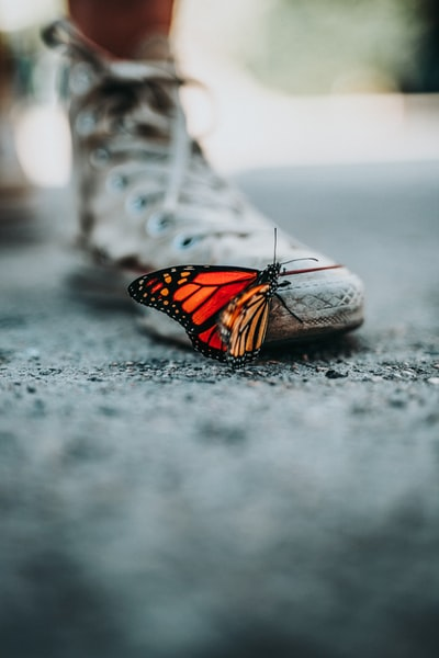 Why are so many butterflies looking for butterflies?